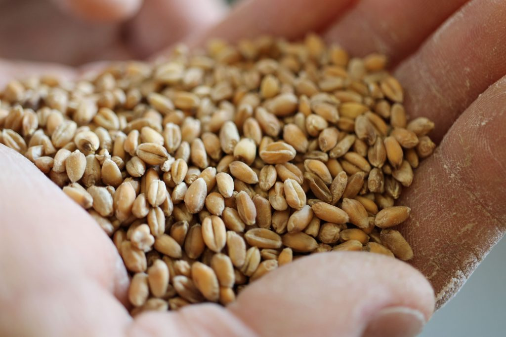 grain dans une main