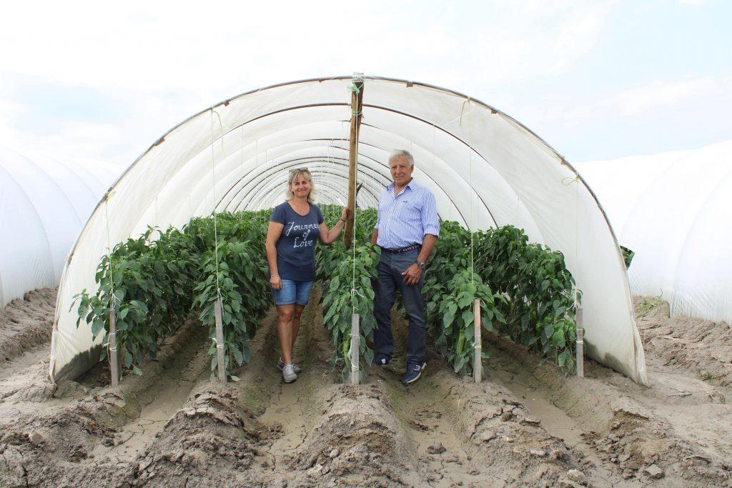 Renata et Domenico devant une serre de poivrons