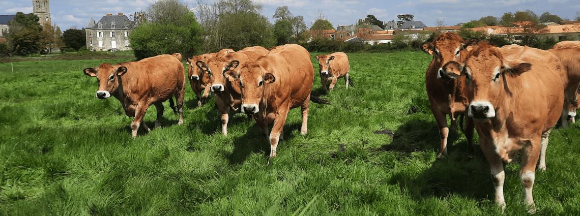 Qual è il ruolo di una cooperativa agricola?